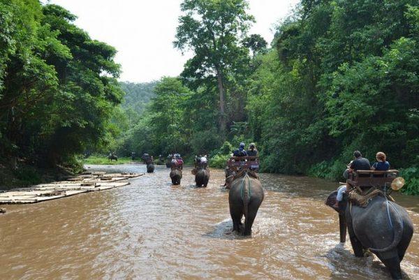 Elephant-Hills-Rainforest-Camp-Thailand