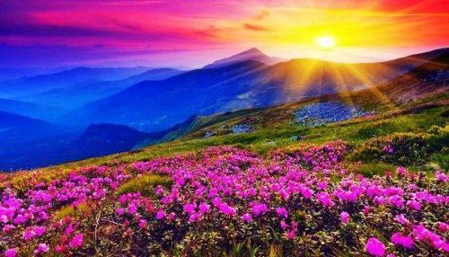 Valley-of-flowers-in-Uttarakhand