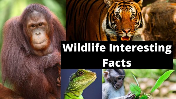 Interesting facts about Indian Wildlife