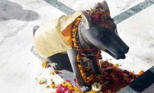 dog-temple-2-10-Incredible-indian-wildlife-facts-the-best-top-10-lists