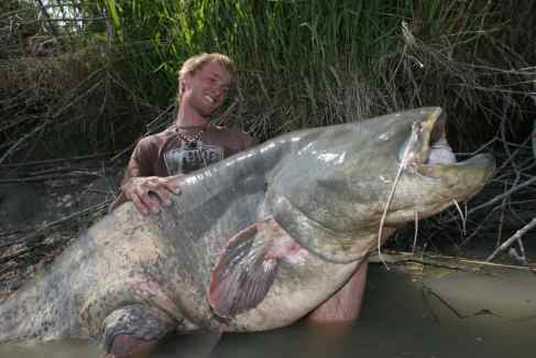 goonch-indian-catfish-10-Incredible-indian-wildlife-facts-the-best-top-10-lists