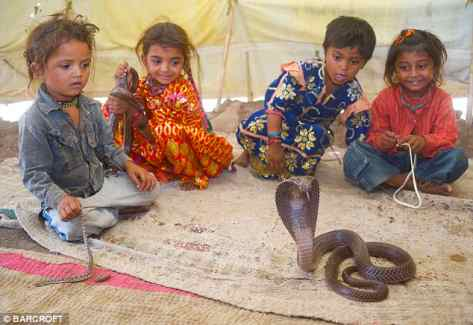 land-of-snakes-2-shetpal-10-Incredible-indian-wildlife-facts-tourist-destination-in-india