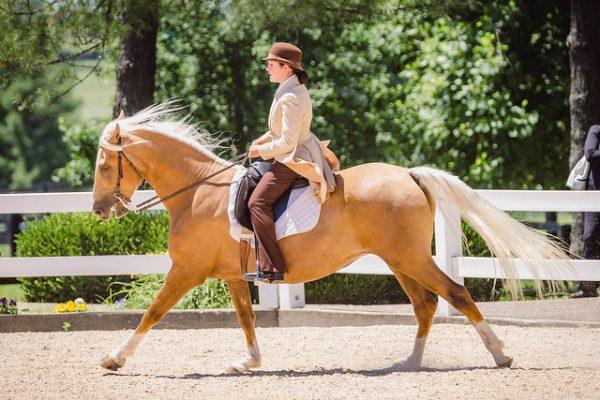 Mountain Pleasure horse