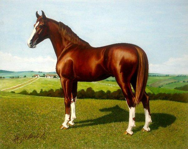 Mangalarga horse