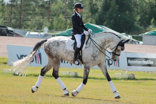 Holsteiner-horse