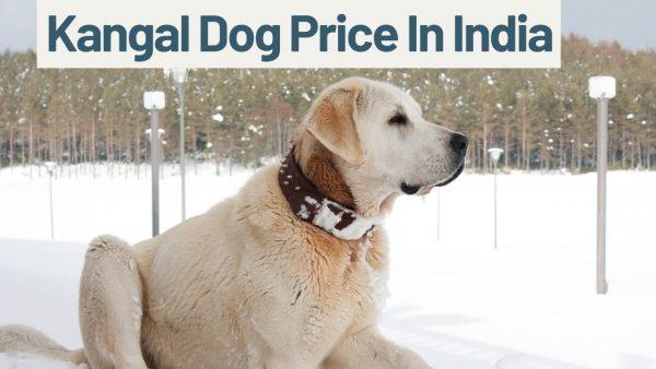 Kangal Dog Price In India