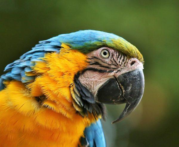 Macaws-1