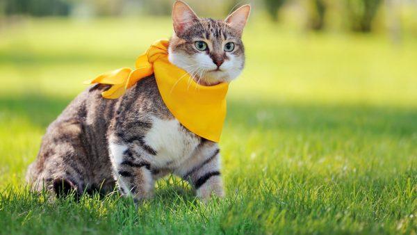 Mixed-Breed-Cat