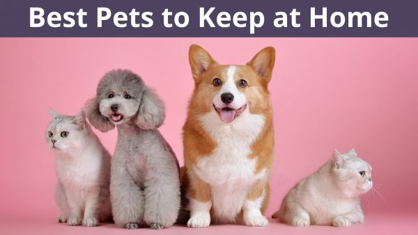 Best Pets to Keep at Home
